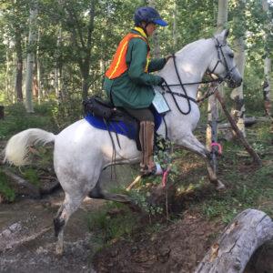 International Saddle