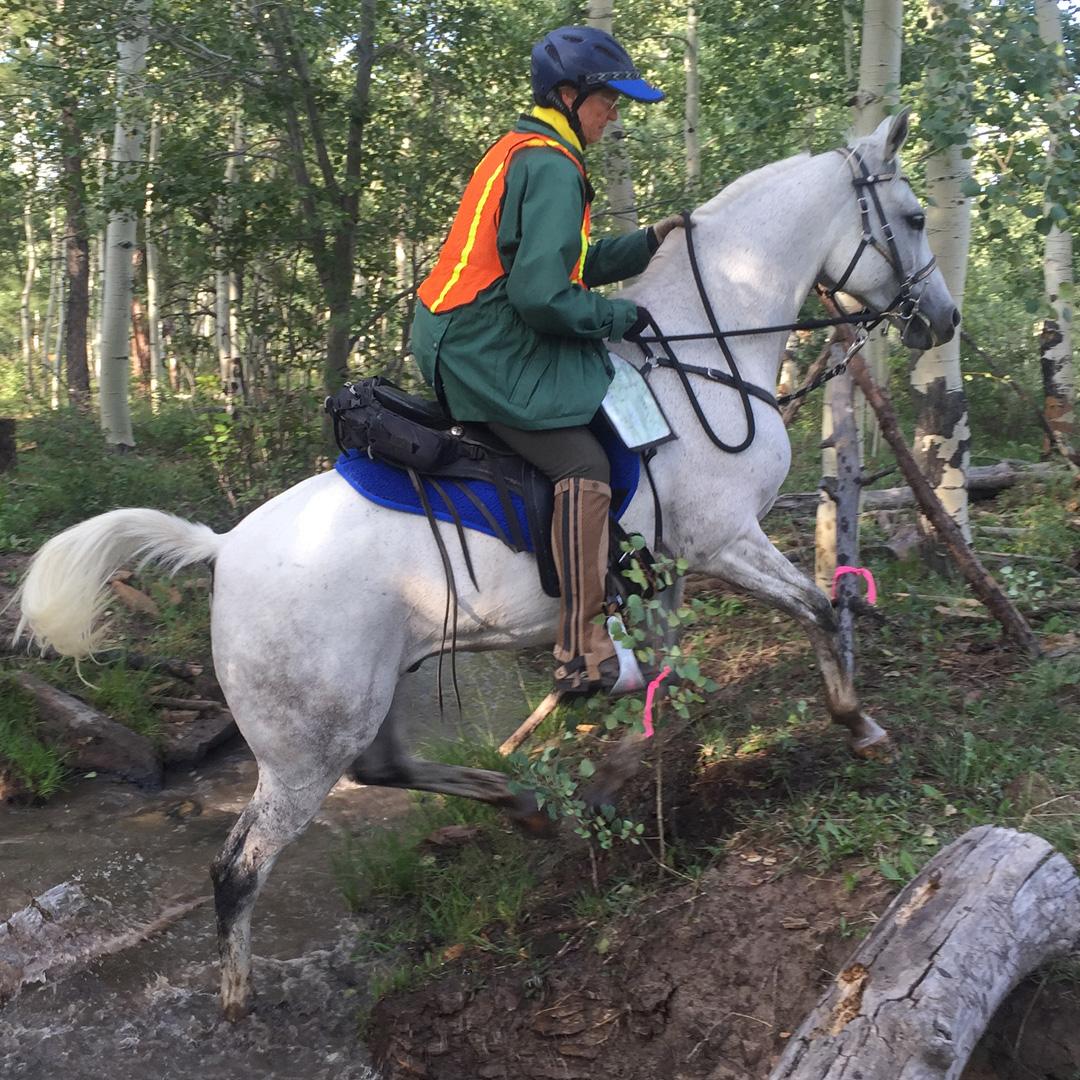 Eurolight Saddle