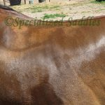 horses sweat patterns